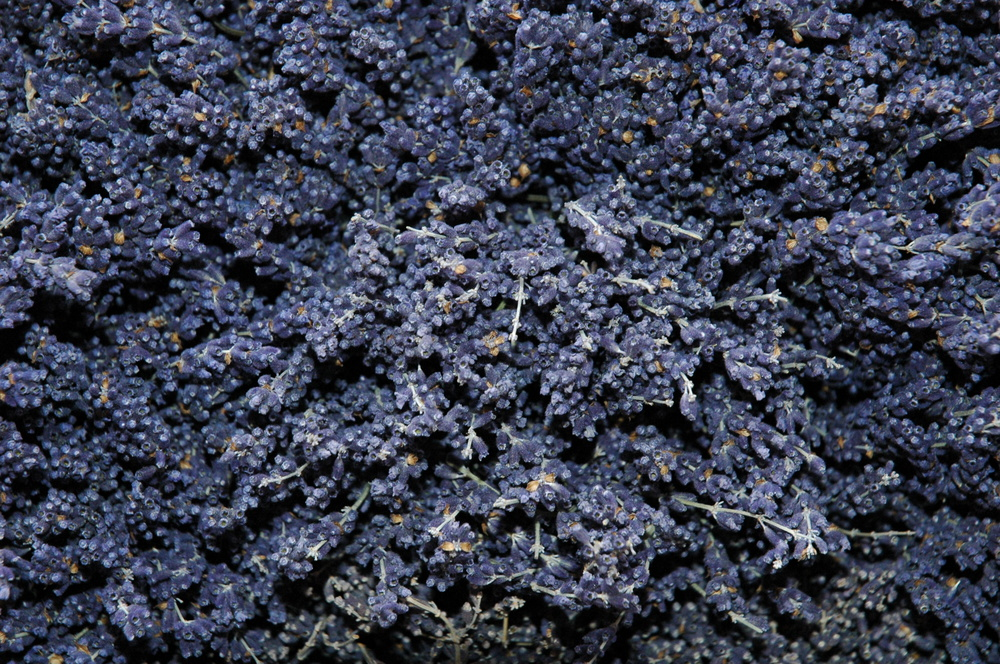 dried lavender (click to go to product)