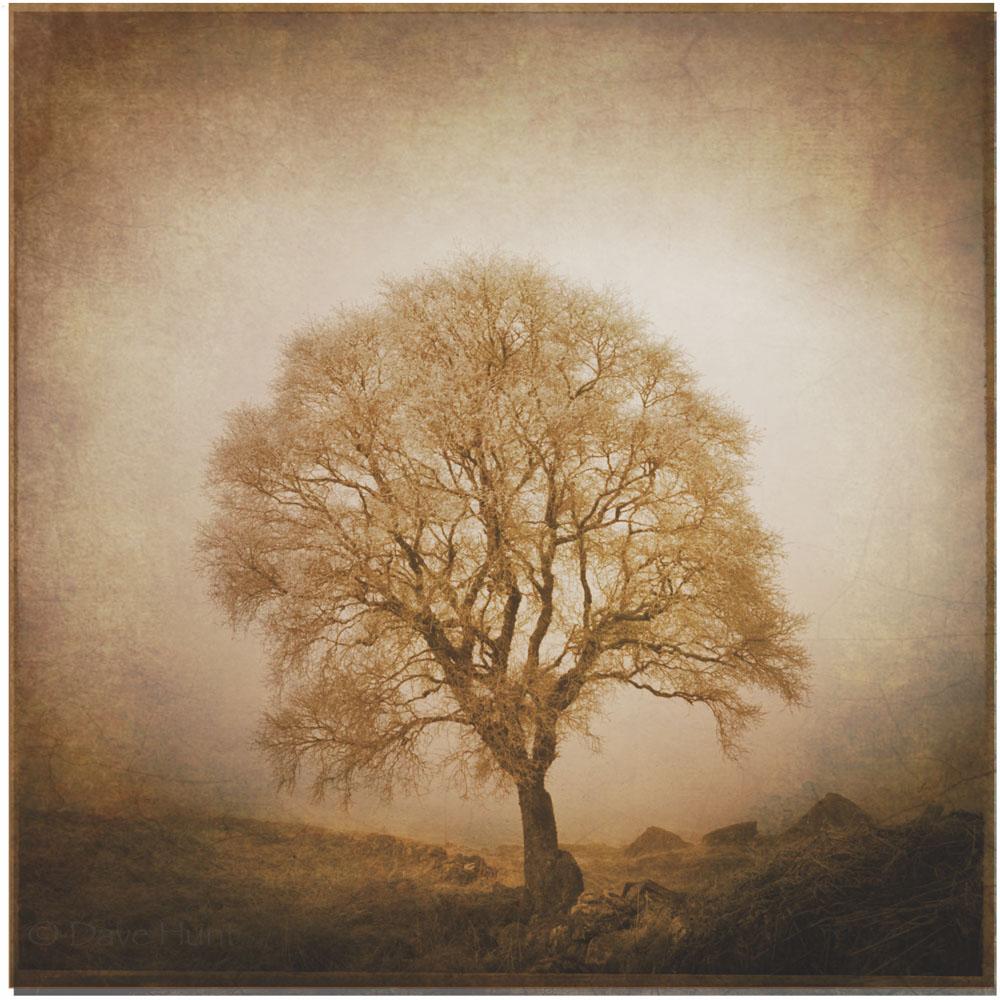 Tree01_p2.jpg