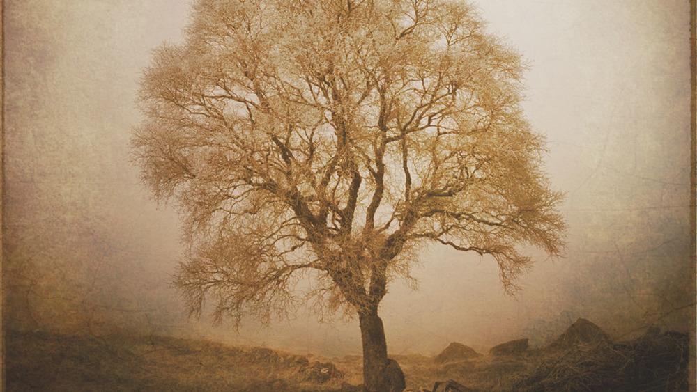 Tree01_p1.jpg