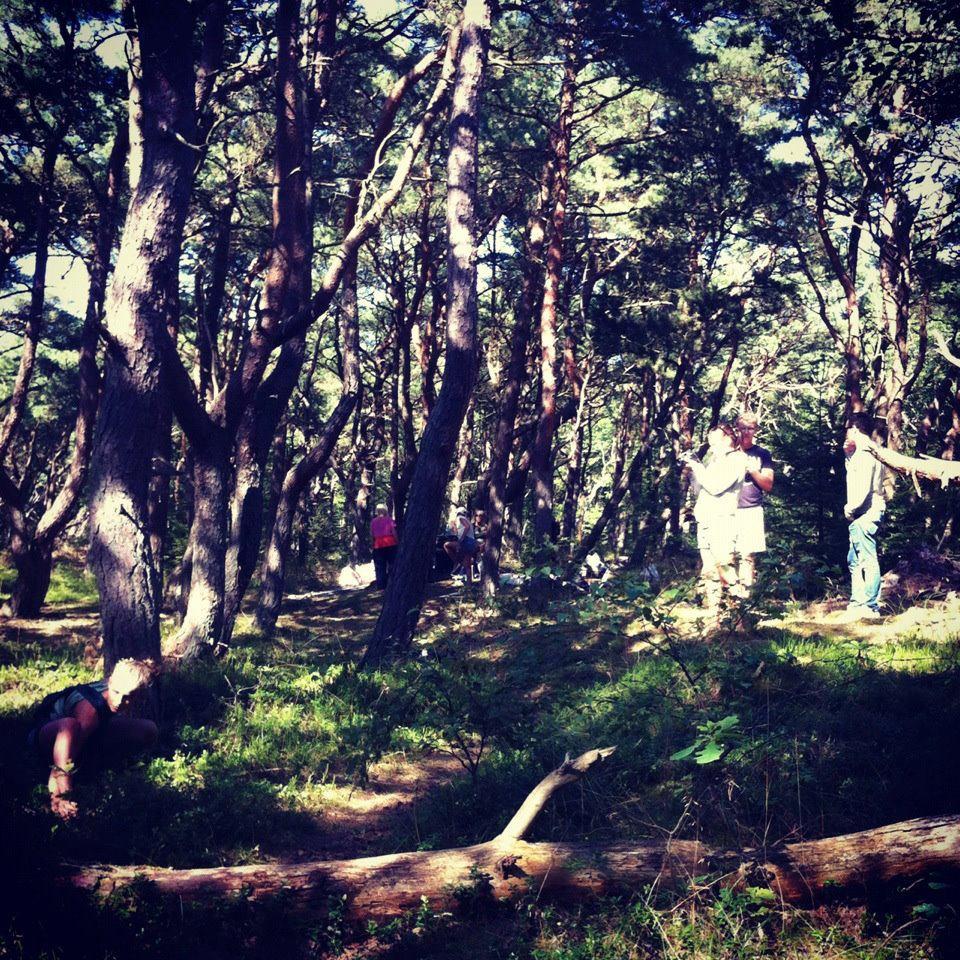 set skog.jpg