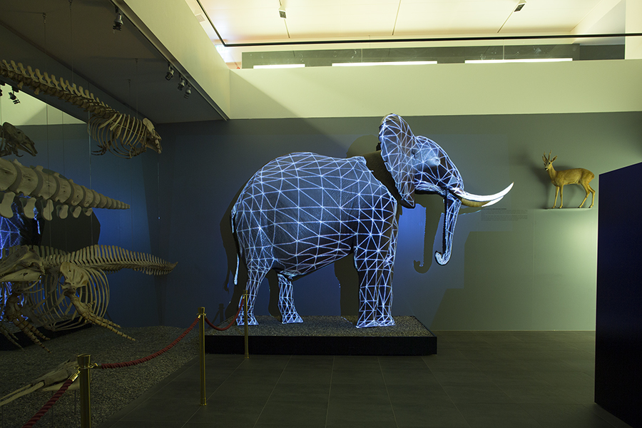Mapping an  elephant by Magdesign.