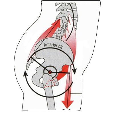 Action of the muscles influencing pelvic tilt