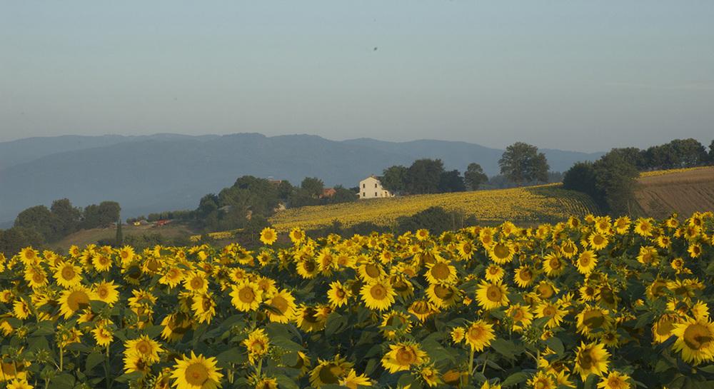 Countryside1.jpg