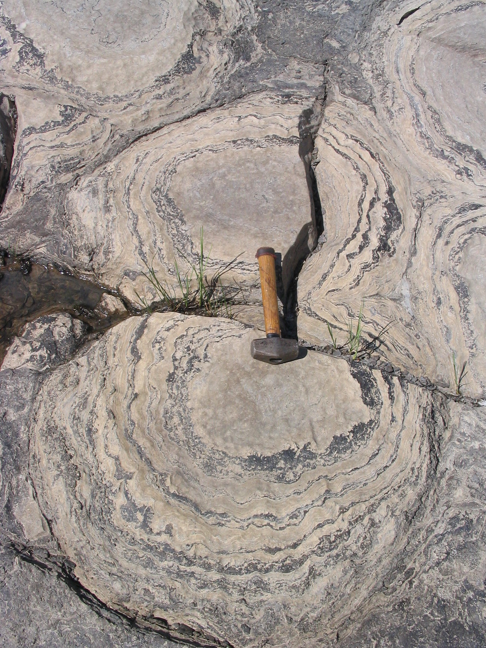 Champlain stromatolites - Close Up