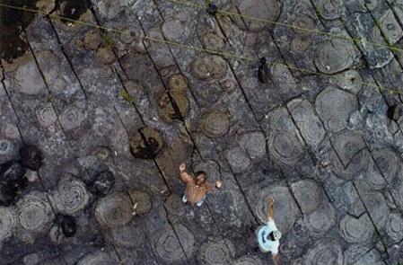 Ordovician stromatolites