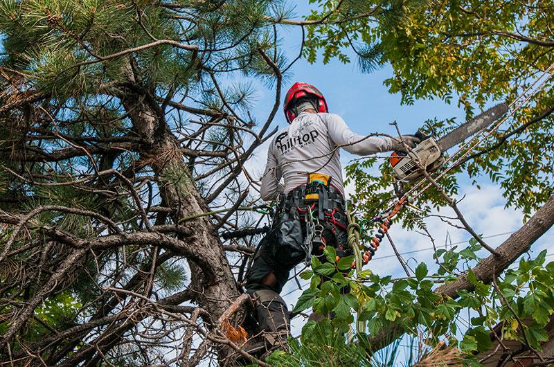 Hilltop Tree Care