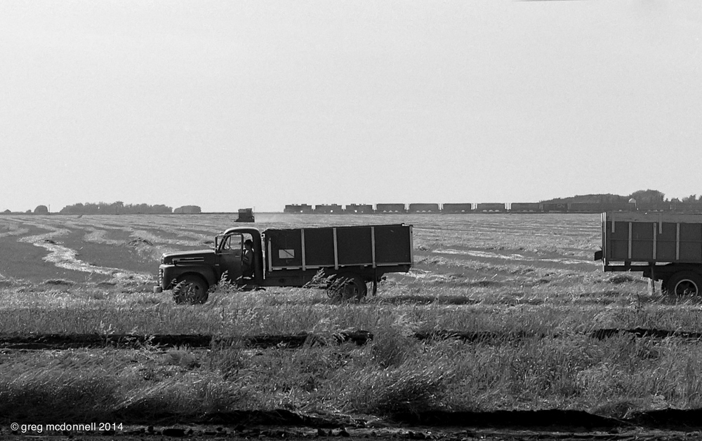 The grain harvest is in full swing on a family farm near Ste. Agathe, Manitoba, as Ten-hundreds 1011, 1051, and 1054 amble past with grain empties for elevators along the Miami and Hartney Subdivisions on August 23, 1984.