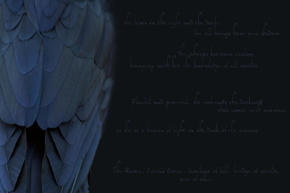 corvus2.jpg