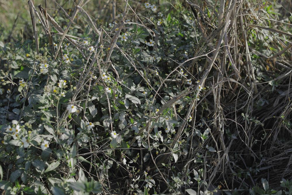 Flora-Misc-023.jpg
