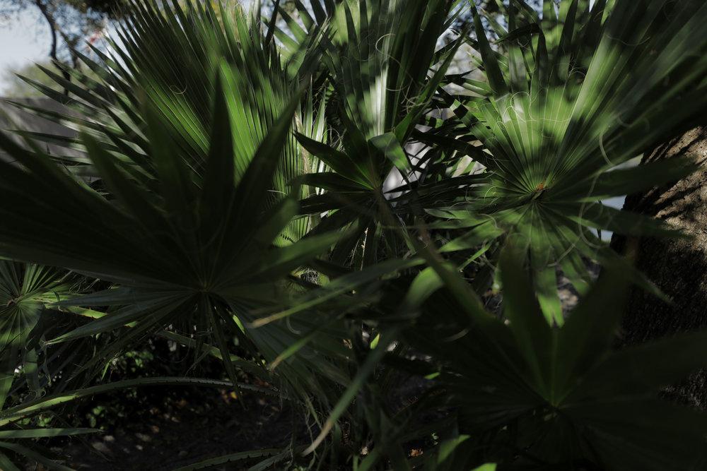 Flora-Misc-030.jpg