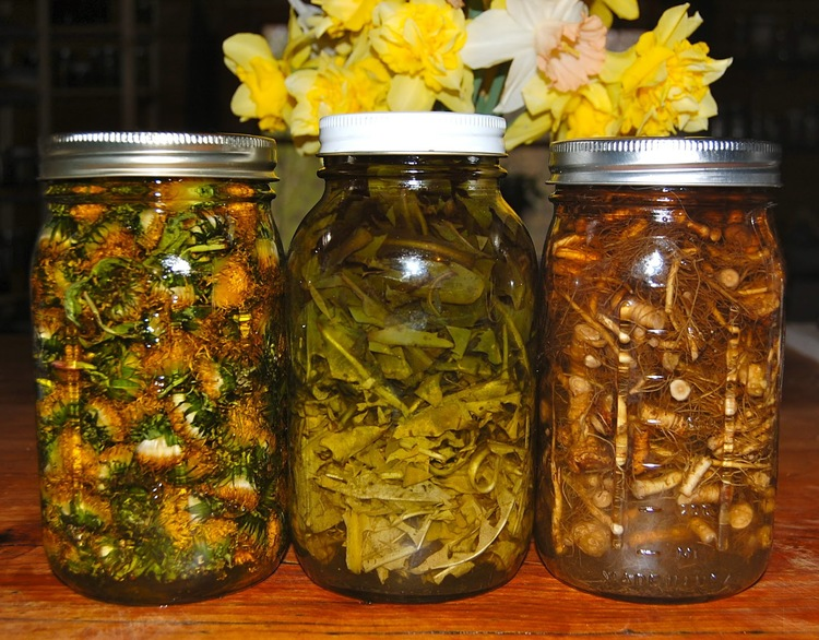 From left to right: dandelion flower oil, dandelion leaf tincture and dandelion root tincture.