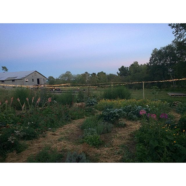 The pre-wedding set up. #Maine #farm #farmlife #wedding Big Thanks to @_amber_jane_ for helping get the garden all ready for tomorrow...it looks Beautiful!