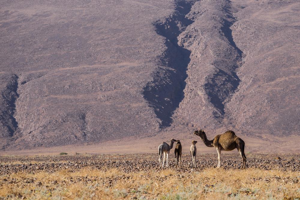 Marokko23.jpg