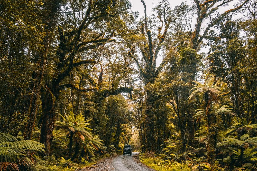 NZ-70.jpg