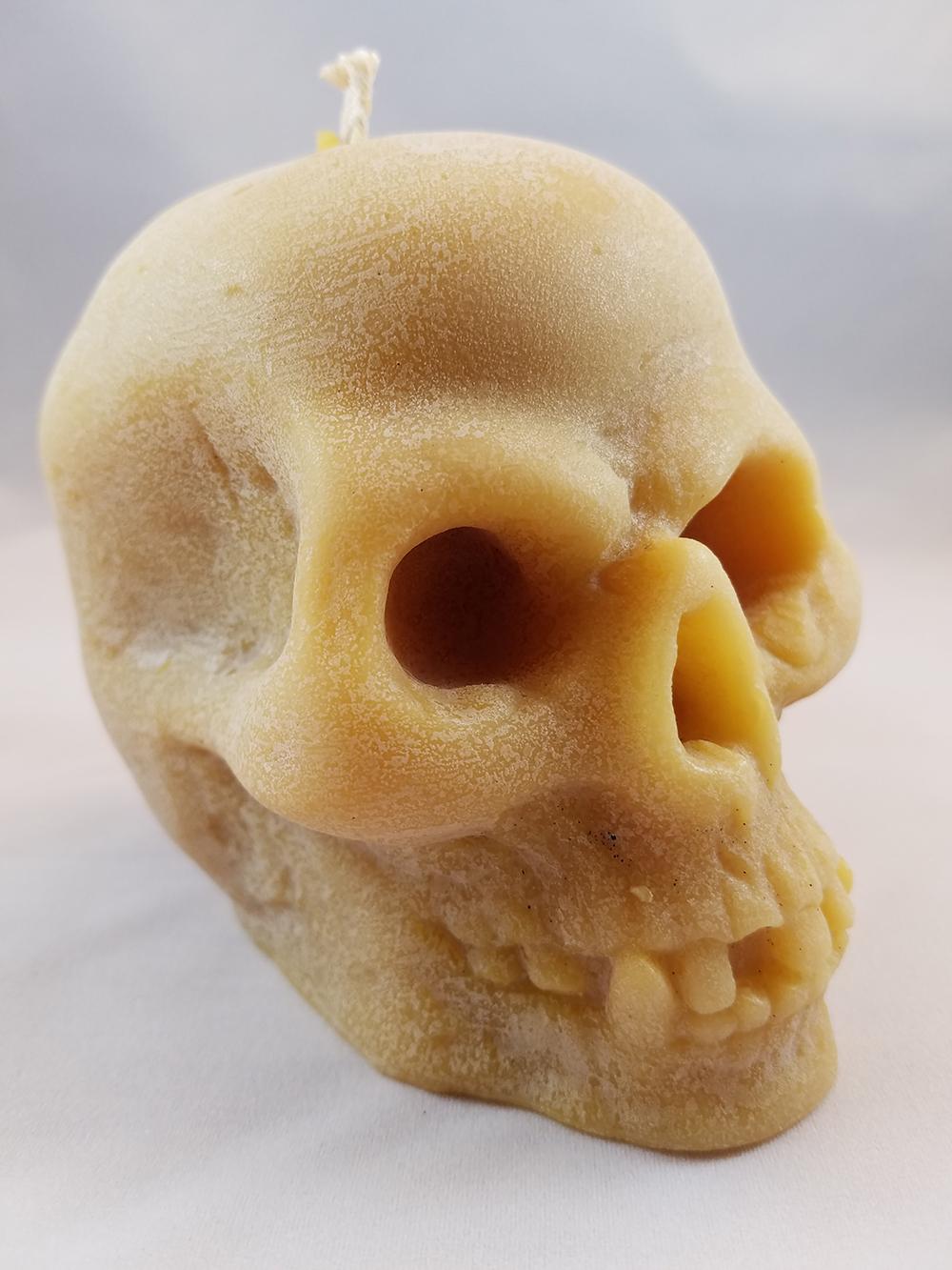 bees nat skull 1.jpg
