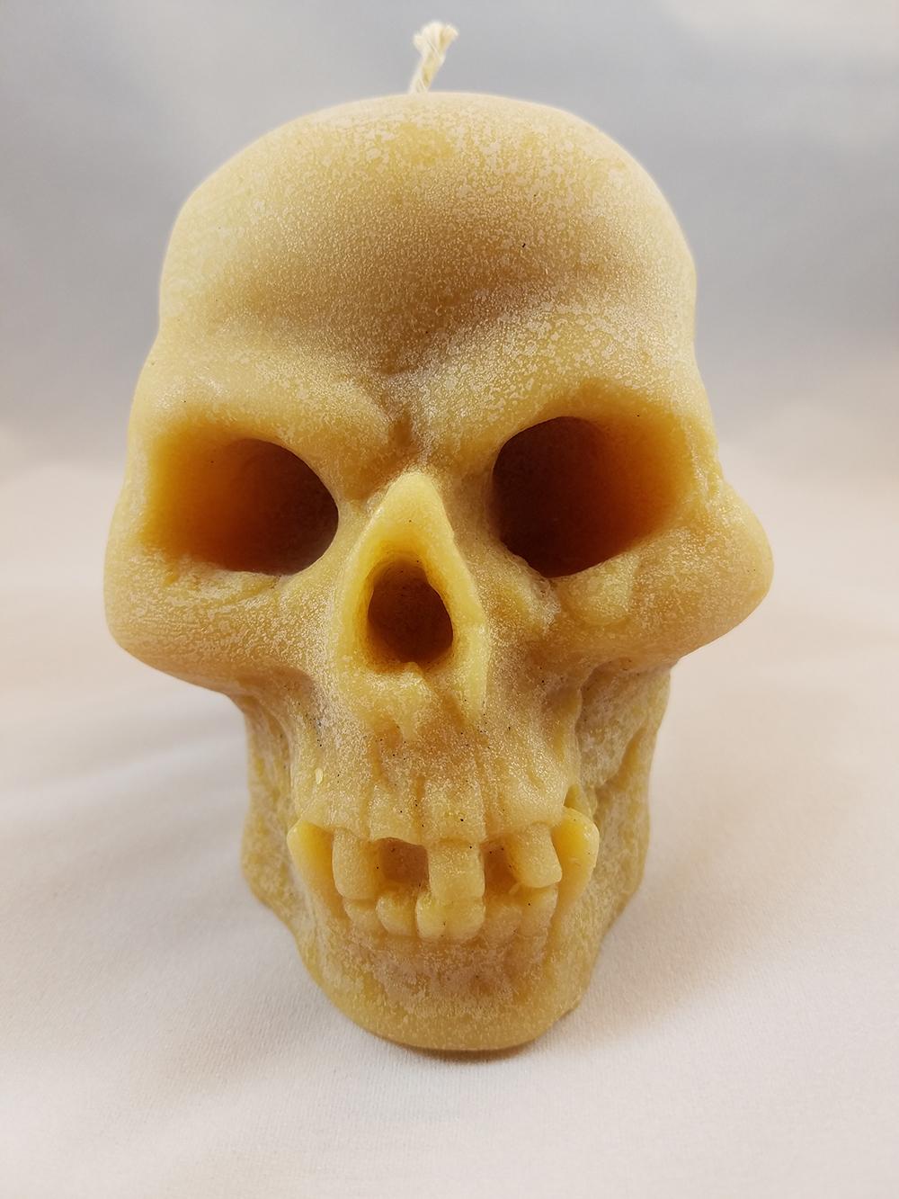 bees nat skull 2.jpg