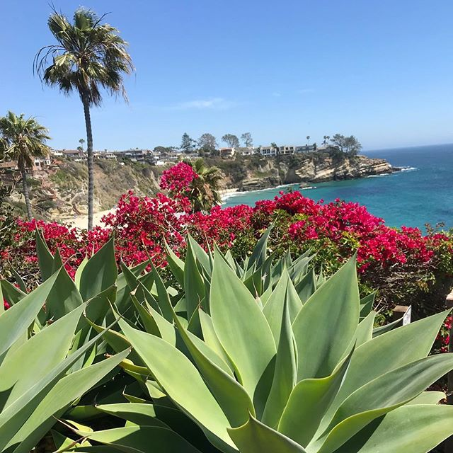 SPRING is here! #california #spring #bougainvillea #succulents #ocean #lagunabeach #saltandpeppersupply