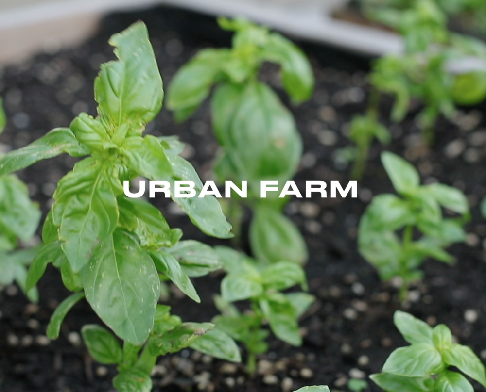 Last year we shared the vision of an urban farm that would bless the local community through providing food to the hungry, bring purpose through serving in the garden and bring the love and life of Jesus Christ right into the neighborhood. We have secured a rooftop location for the garden and we are in the process of purchasing a Greenhouse. IN 2018 we will continue to pioneer to make the Urban Garden project an active and fruitful bridge from our church into the local community.