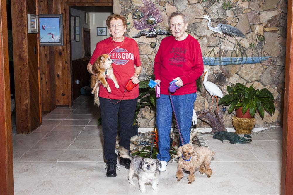 Senior pets -