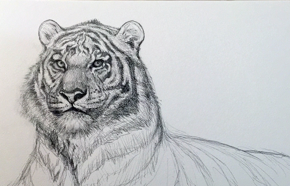 tigerstudy4web
