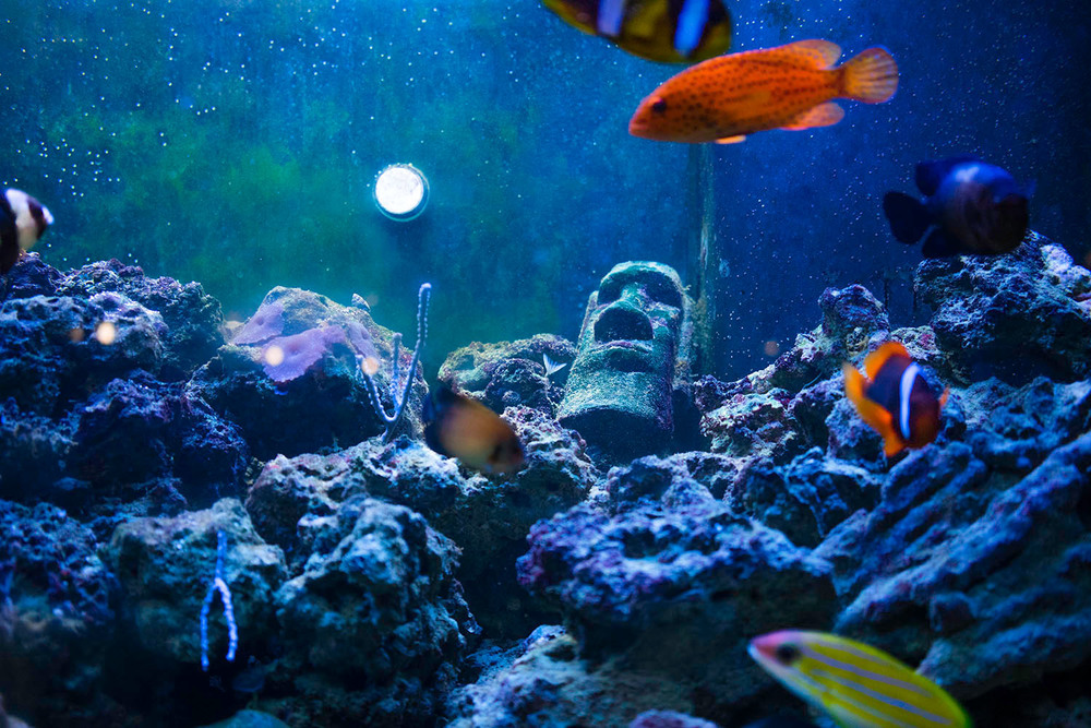 hayes_k_fish-tank.jpg