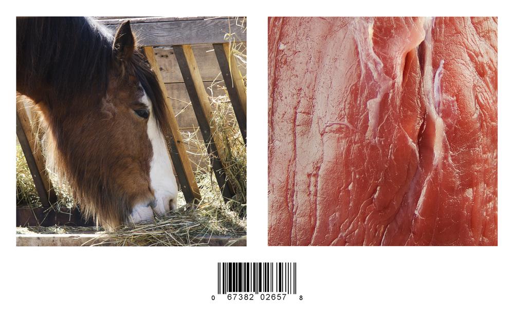horsediptychweb.jpg