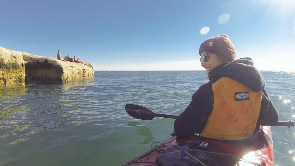 The kayaking was an especially rewarding experience.  As we paddled down the coast line, watching shoals of rare cormorants on sheer cliffs of epic proportions, lion seals would come around the boat to within touching distance to investigate.