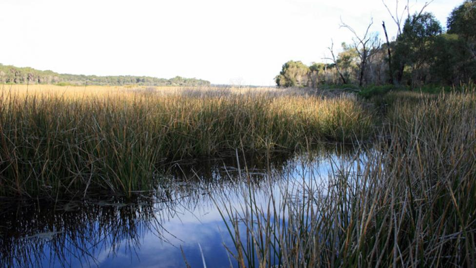 Swan Coastal Plain | Image Credit: West Australian Museum