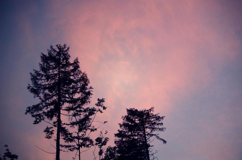 magicalforest1.jpg