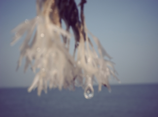 9_oceanweed-1.jpg