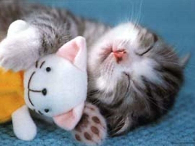 too-cute-kitten.jpg