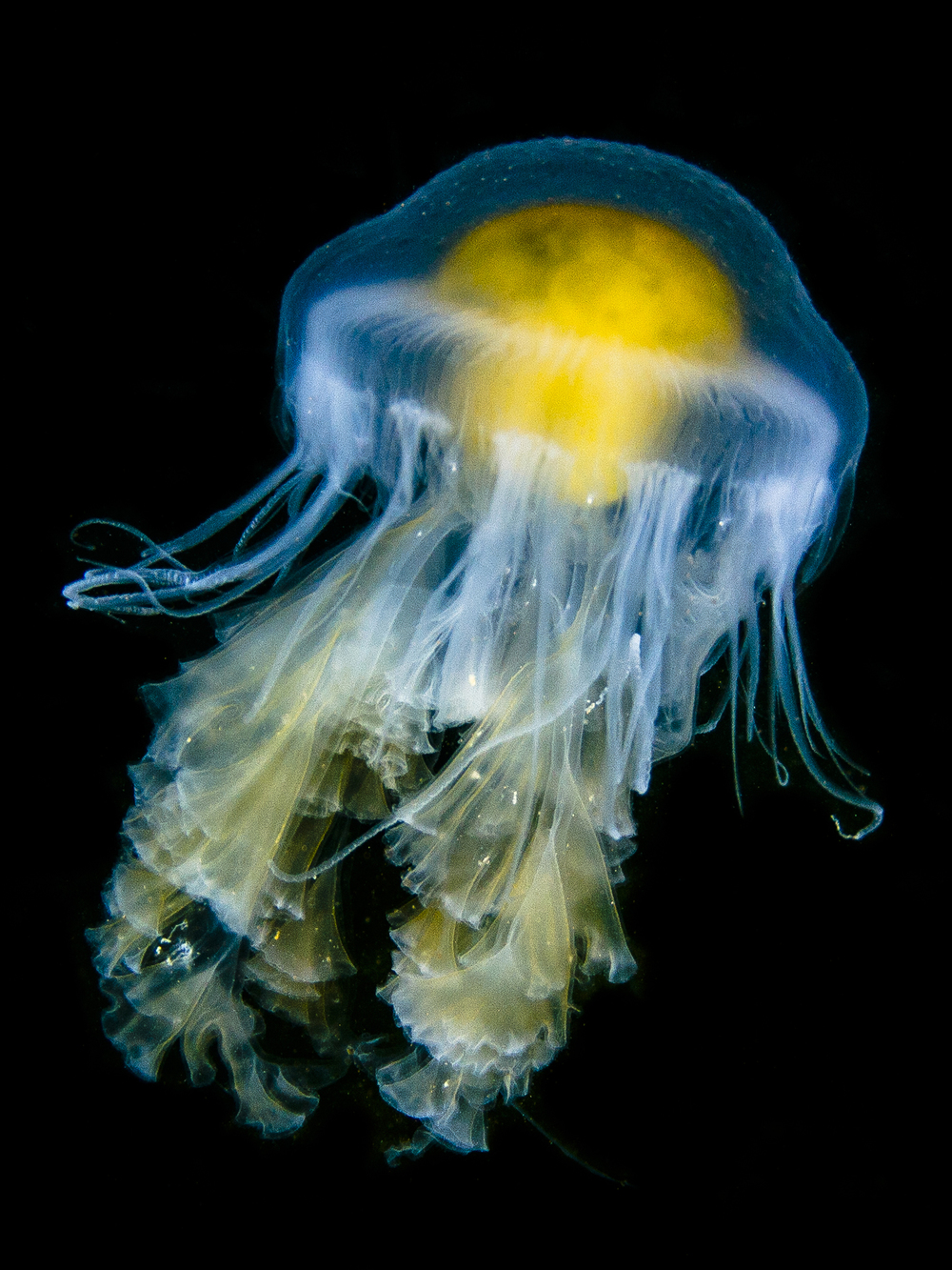 Egg-yolk Jelly 5x7.jpg