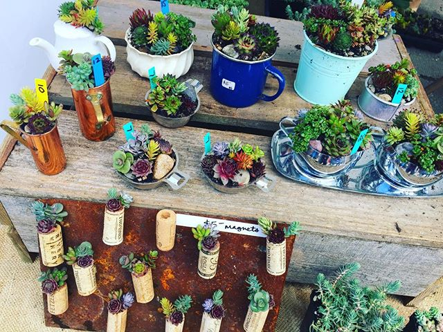 Love, love love @coloringnatureinbloom little airplant forests! Come see these wonders in person. Prices start at just $12 and make the perfect gift for home or office! #airplants #succulents #garden #fleamarketfinds #streetmarket
