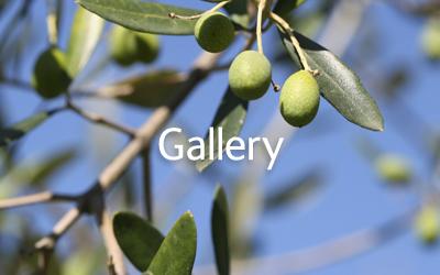 casa-gallery.jpg