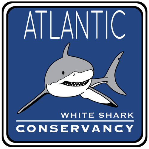 order license plates atlantic white shark conservancy atlantic white shark conservancy