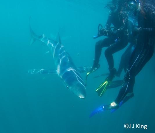 blue-sharks-with-joe-romeiro-5.jpg