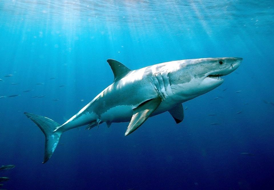 Learn From Shark Tank, Please!