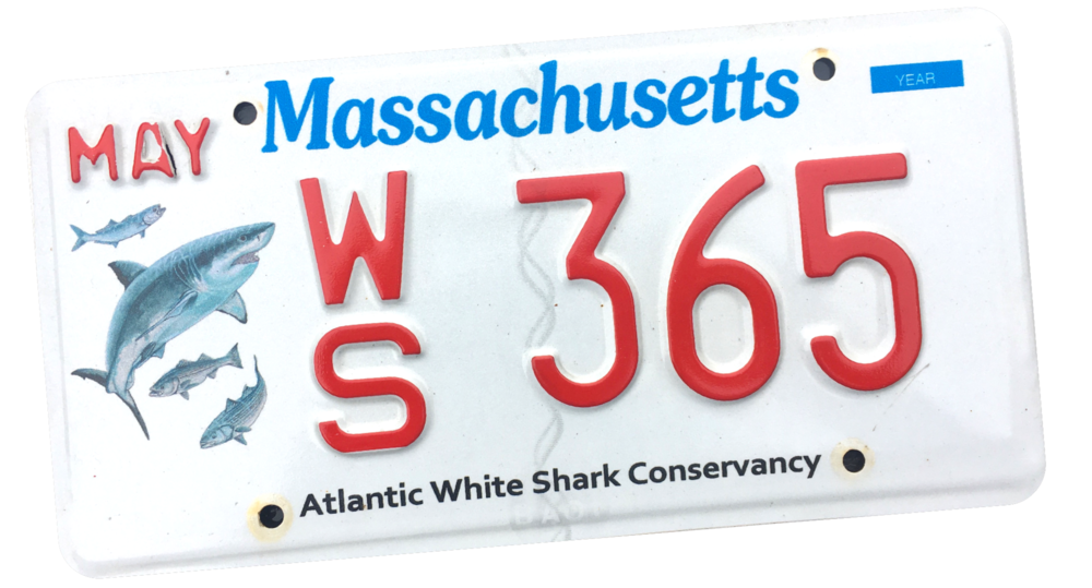 WS+Plate-WBG.png