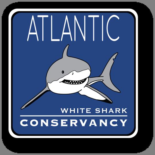 Download Sharktivity — Atlantic White Shark Conservancy