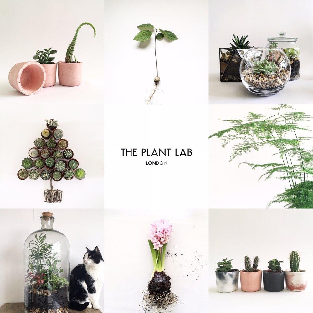 The Plant Lab