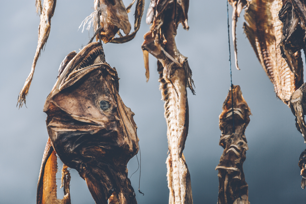 Deep sea fish drying in Iceland.jpg
