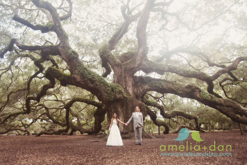 Jamie Keele and Alex Todd's wedding at the Angel Oak Tree in Charleston South Carolina. amelia + dan photography, charleston sc, 843.801.2790, wedding and portrait photographer, modern vintage photojournalism
