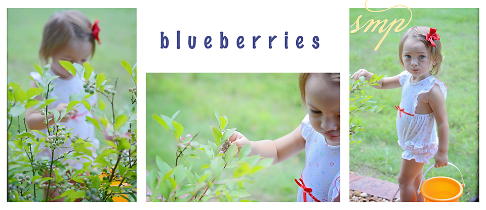blueberries copy.jpg