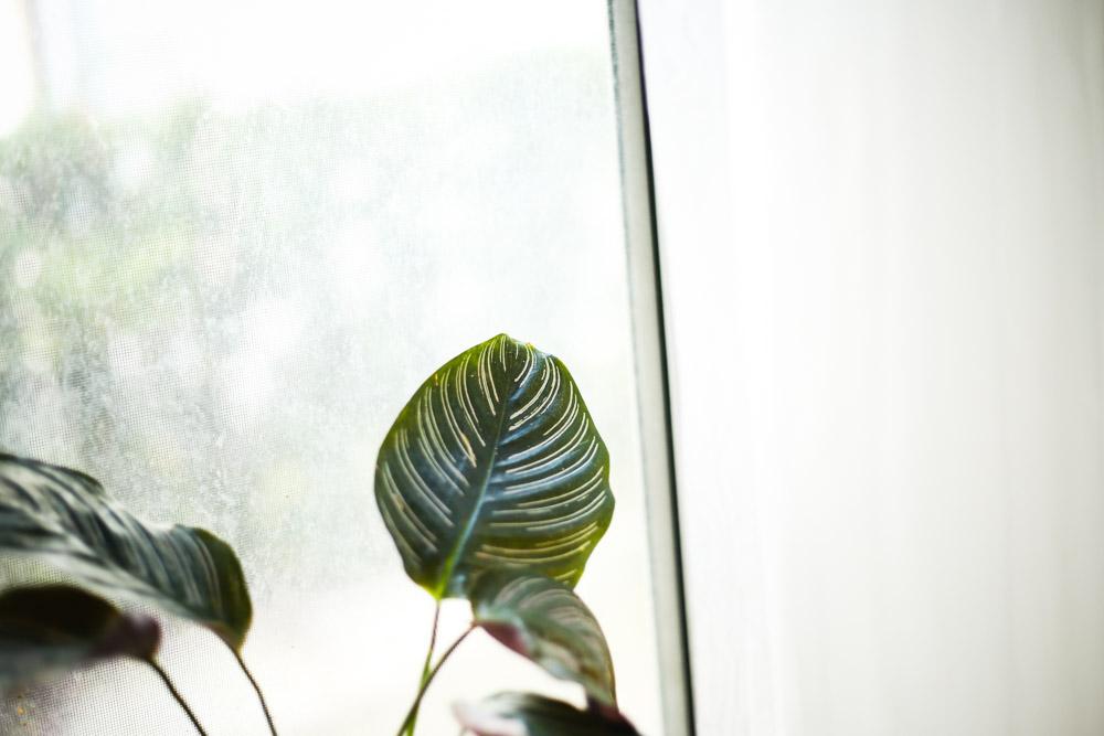master-class-leibovitz-photo-natural-light-blog.jpg