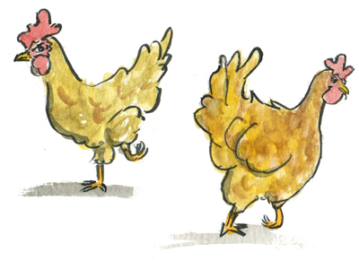 Chicken or chicken? For an upcoming illustration project.