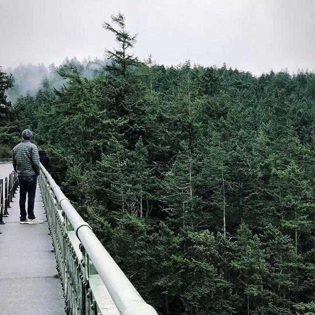 Camouflaged into his favorite landscape ☁️🌲🌲🌲☁️