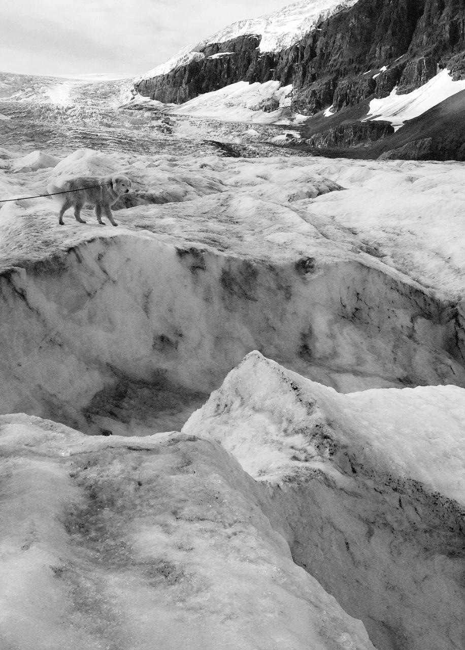 Athabasca Glacier, Alberta, Canada   Purchase