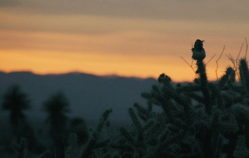 A bird visits the camp at sunrise