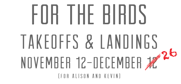 for the birds.png