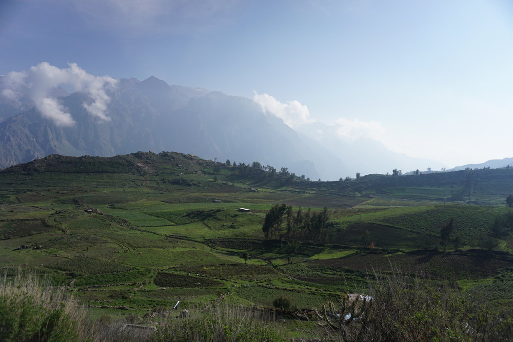 Another pastoral scene in Colca Valley